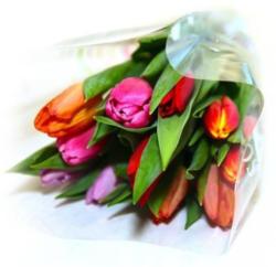 Tulpen Rainbow im Bund