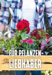 Hellweg - BAUFREUND Handelsgesellschaft m. b. H. Pflanzen für Haus und Garten - bis 31.08.2019
