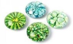 Magnete Succulent