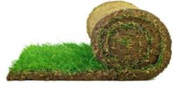 Plantiflor Rollrasen Premium-Qualität
