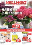 HELLWEG Baumarkt Wochenangebote - bis 08.06.2019