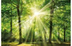 Keilrahmenbild 78x118 cm Wald
