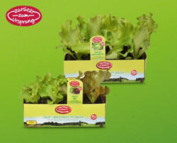ZURÜCK ZUM URSPRUNG Österreichische Bio-Salat-/ Gemüsepflanze