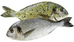 Dorade Royale Cromaris  natur oder grillfertig mariniert, aus Aquakultur in Kroatien, je 100 g