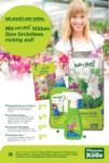 Pflanzen-Kölle Gartencenter Orchideen - bis 12.02.2020