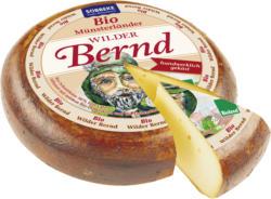 Münsterländer Wilder Bernd