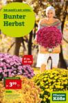 Pflanzen-Kölle Gartencenter Angebote der Woche - bis 11.09.2019