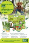 Pflanzen-Kölle Gartencenter Gärtnern - bis 18.03.2020