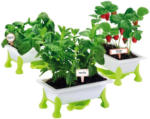 Möbelix Kinder-Pflanzset Grüner Daumen Kräuter