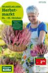 Pflanzen-Kölle Gartencenter Angebote der Woche - bis 10.10.2019