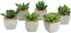 Kunstpflanze Sukkulente in versch. Designs