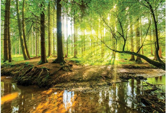 Wandtattoo Wald