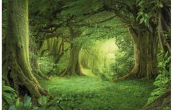 Keilrahmenbild ca. 116x76cm Wald