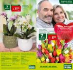 Pflanzen-Kölle Gartencenter Wochenangebote - bis 19.02.2020