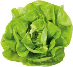 Häuptelsalat aus Italien