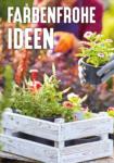 HELLWEG Baumarkt Pflanzen für Haus und Garten - bis 31.08.2020