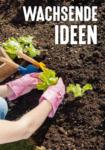 HELLWEG Baumarkt Pflanzenpflege und -anzucht - bis 31.08.2020