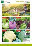 BayWa Bau- & Gartenmärkte Pflanzen für Haus und Garten - bis 31.08.2020