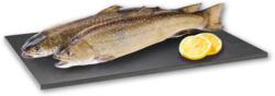 Eisvoel ASC-Zertifizierter Bachsaibling*