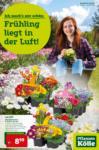 Pflanzen-Kölle Gartencenter Wochenangebote - bis 25.03.2020