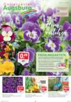 Gartencenter Augsburg Wochenangebote - bis 15.03.2020
