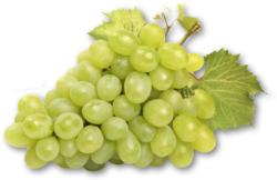Süße Trauben weiß kernlos