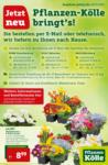 Pflanzen-Kölle Gartencenter Wochen-Special - bis 28.03.2020