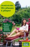 Pflanzen-Kölle Gartencenter Wir pflanzen & pflegen! - bis 17.04.2020