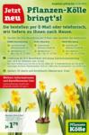 Pflanzen-Kölle Gartencenter Pflanzen Kölle Lieferservice - bis 11.04.2020