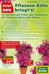 Pflanzen-Kölle Gartencenter Pflanzen Kölle Lieferservice - bis 15.04.2020