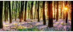 Dekopaneel Veilchen Wald