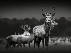 Keilrahmenbild Herd Of Deer