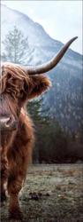 Keilrahmenbild Scottish Highland Cattle