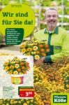 Pflanzen-Kölle Gartencenter Aktuelle Angebote - bis 06.05.2020