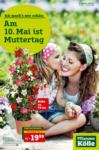Pflanzen-Kölle Gartencenter Aktuelle Angebote - bis 13.05.2020