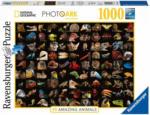 OTTO'S Puzzle 99 animaux magnifiques 1000 pièces -