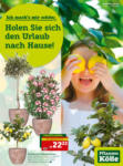Pflanzen-Kölle Gartencenter Aktuelle Angebote - bis 27.05.2020