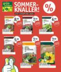 OLDENBURGER WOHNGARTEN GmbH & Co. KG Sommerknaller - bis 28.05.2020