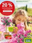 Pflanzen-Kölle Gartencenter Aktuelle Angebote mit 20% Rabatt-Coupon - bis 03.06.2020