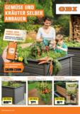 Gemüse und Kräuter selber anbauen