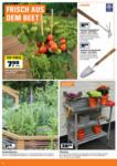 OBI Gemüse und Kräuter selber anbauen - bis 04.06.2020