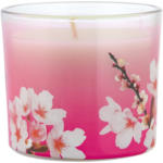 OTTO'S Febreze Candle 100g Red Cherry Blossom -