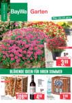 BayWa Bau- & Gartenmärkte Wochenangebote - bis 15.08.2020