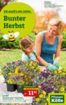 Pflanzen-Kölle Gartencenter Aktuelle Angebote - bis 09.09.2020