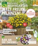 OLDENBURGER WOHNGARTEN GmbH & Co. KG Jetzt Freude pflanzen! - bis 16.09.2020