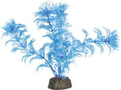 Amazonas Nano Pflanze blau 12cm