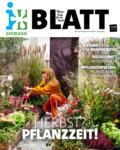 Blumen Ostmann GmbH Blatt Nr. 8 - bis 25.09.2020