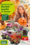 Pflanzen-Kölle Gartencenter Aktuelle Angebote - bis 14.10.2020