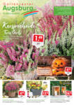 Gartencenter Augsburg Wochenangebote - bis 04.10.2020