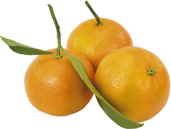 Clementinen mit Blätter
